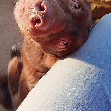 Keira - A cute doggie by gemzysworld