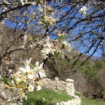 Ruins in bloom by DrFrankenbaum