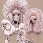 Poodle by BarbBarcikKeith