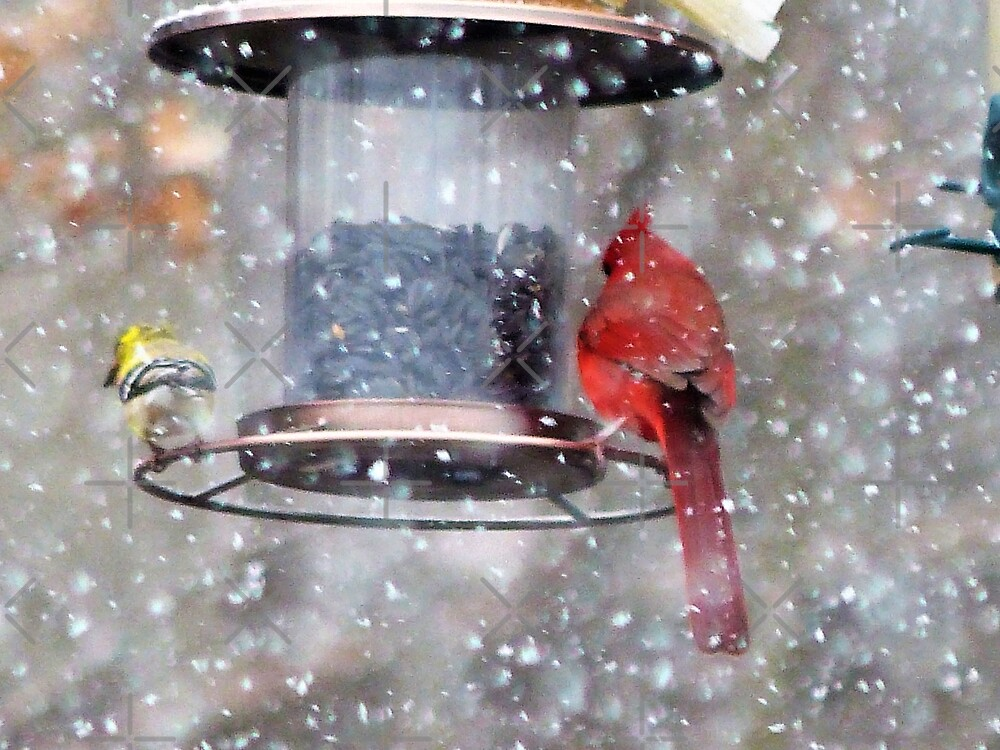 Goldfinch and Cardinal at Feeder by FrankieCat