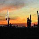 Dancing Desert  by Judy Ann  Grant