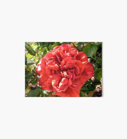 Red Rose Art Board