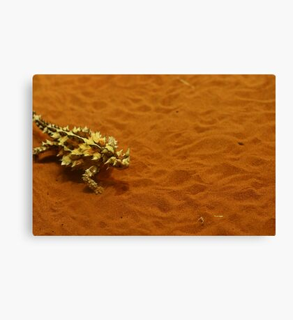 Thorny Devil Canvas Print