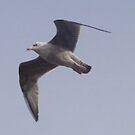 Free as a birdtaken in Ayr by neon-gobi