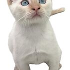 Flame Point Siamese Kitten by misimichu