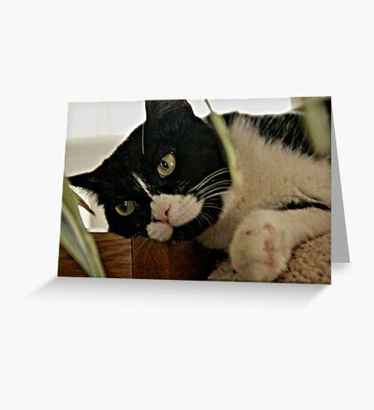 Posing  Cat Greeting Card