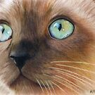 Turquoise Eyes by Karen  Hull