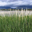 The Hills of Harris through the Long Grass von BlueMoonRose