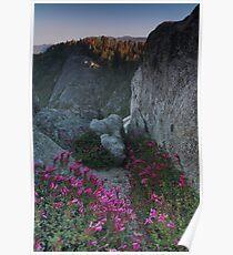 Penstemon, Moro Rock, & the Sierra Nevada Poster
