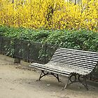 Parisian bench by triciamary