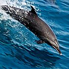 Leaping Dolphin by Barbara  Brown
