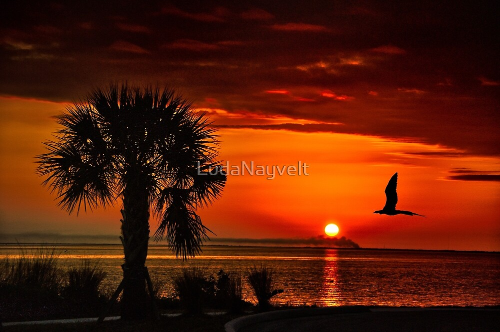 Take me to the sun by LudaNayvelt
