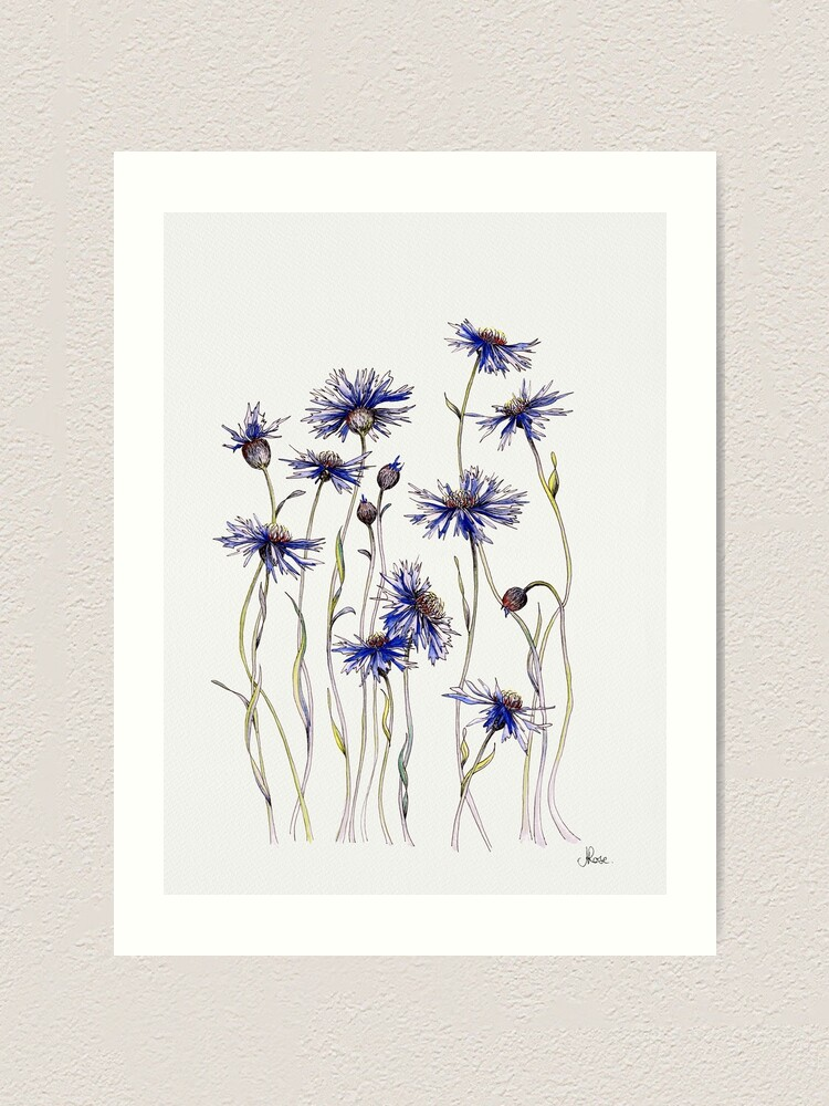 Alternate view of Blue Cornflowers  Art Print
