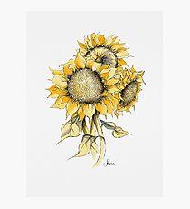 Gelbe Sonnenblumen Fotodruck