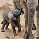 I AM HUNGRY - BABY ELEPHANT -  THE AFRICAN ELEPHANT – Loxodonta Africana by Magriet Meintjes
