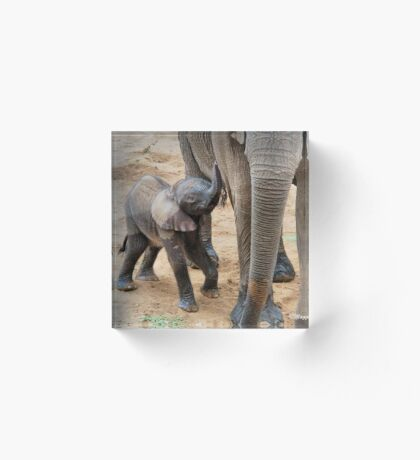 I AM HUNGRY - BABY ELEPHANT -  THE AFRICAN ELEPHANT – Loxodonta Africana Acrylic Block