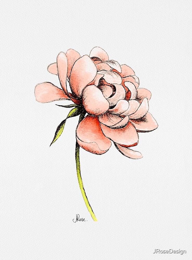 Korallenrote rosa Pfingstrose, Illustration von JRoseDesign