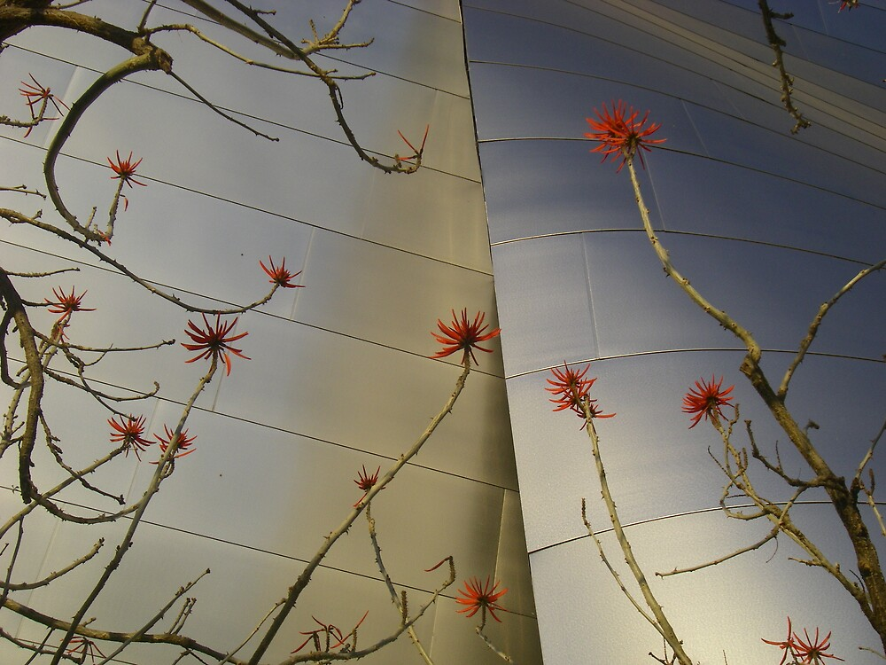 coral tree blossoms at disney concert hall by karen peacock