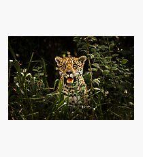 Award Winning Wildlife Photography   Jaguar Photographic Print