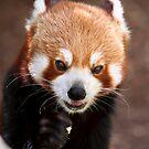 Munching Panda by PsiberTek