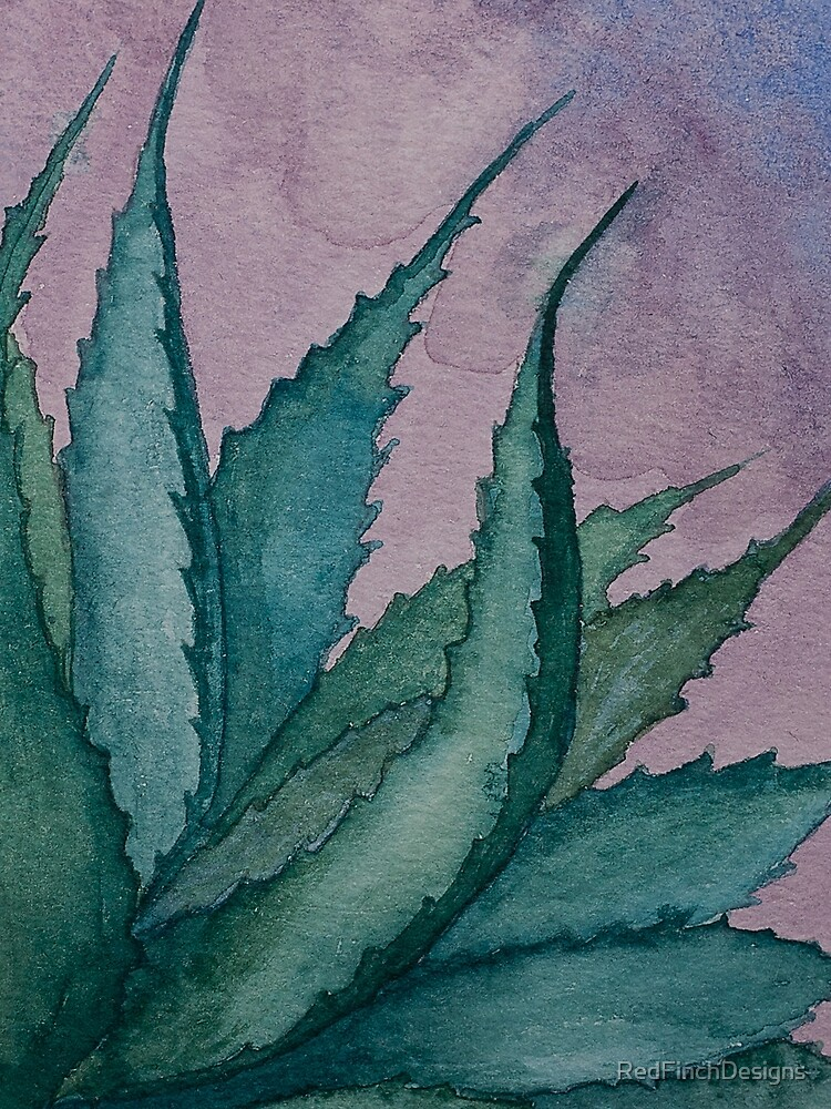 Agave plant watercolor painting by RedFinchDesigns