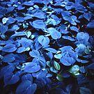 Blue leaves by michelofya