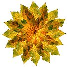 Maple leaf 1 by ColourCottage