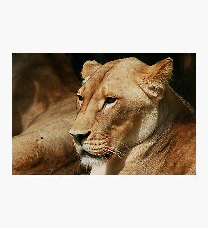 Lion Heart Photographic Print