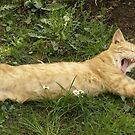 Cat by dominikanac