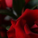 Red Roses by Kimberly Johnson
