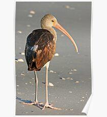 Long Legged Beauty Poster