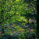 Secret Garden by Ruski