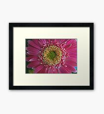 Daisy Up Close Framed Print