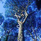 Tree by Marloag