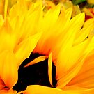 Embracing Petals by Susan McKenzie Bergstrom