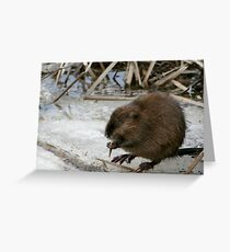 """Toothpick"" Greeting Card"