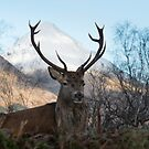 Majestic Monarch by Craig Goldsmith