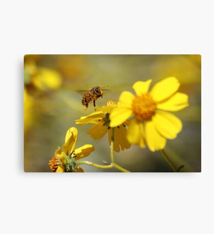Pollinated Canvas Print
