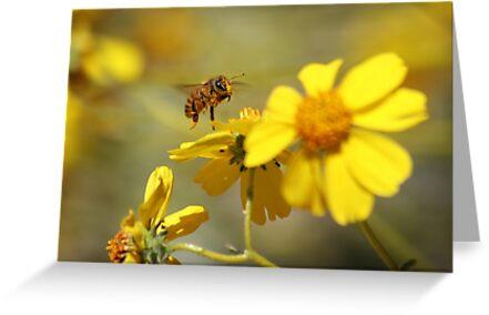 Pollinated by Daniel J. McCauley IV