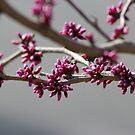 Pink Bud by Valeria Lee