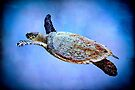 Turtle in the blue by missmoneypenny
