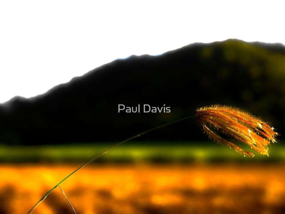 Envious Mountains by Paul Davis