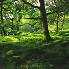 Into the green by ColourCottage