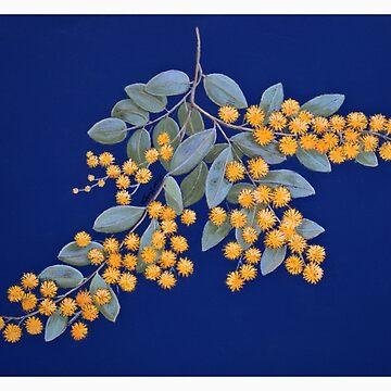 Golden Wattle - Australian National Floral Emblem by Ainslie1