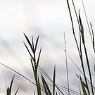 Grasses 2 by ColourCottage