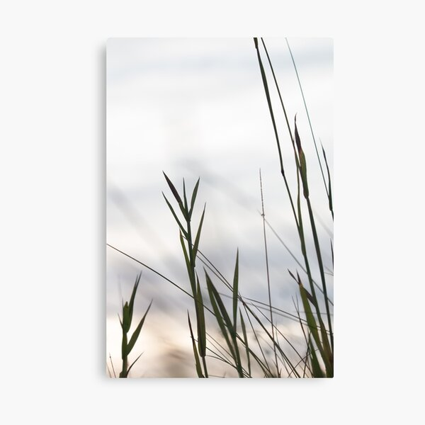 Grasses 2 Canvas Print