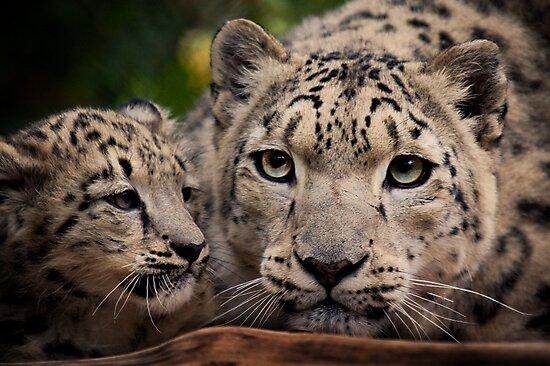 Snow Leopards by Natalie Manuel