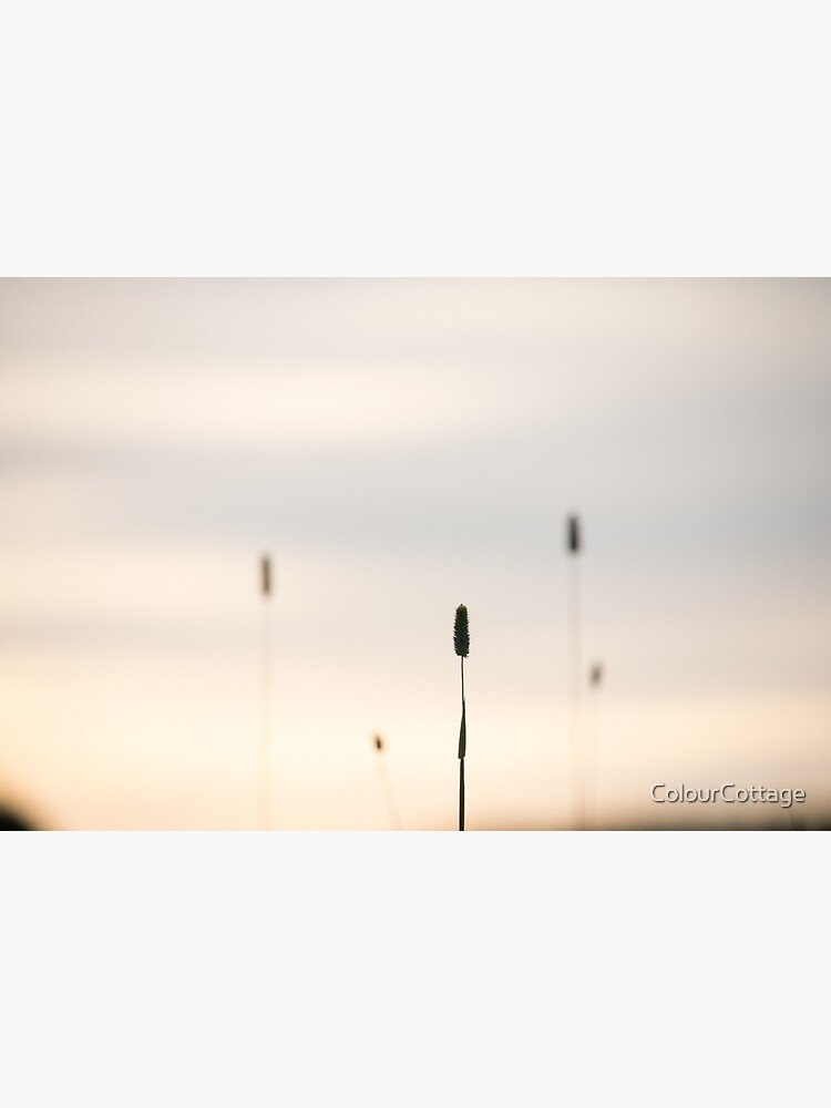 Grasses 4 by ColourCottage