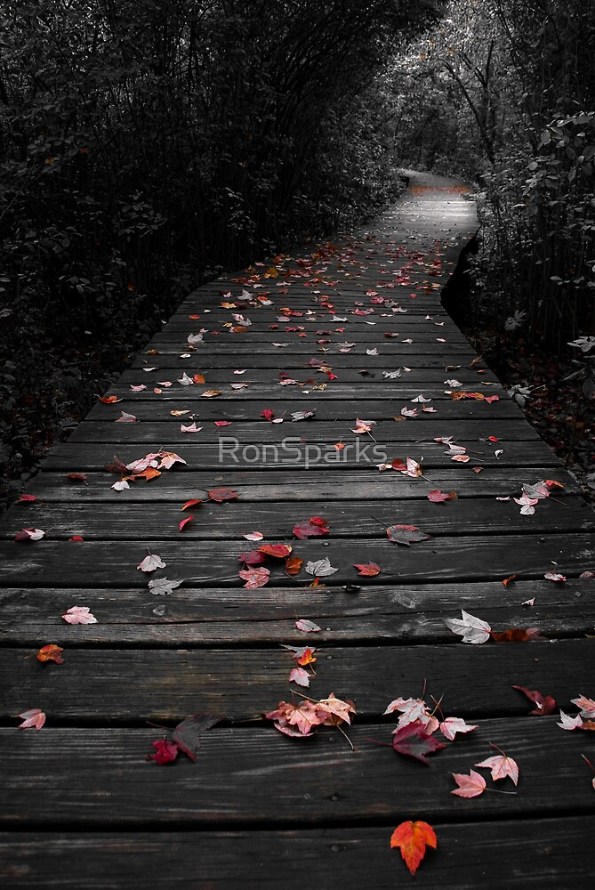 Colorful Path by RonSparks