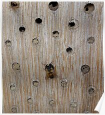 Solitary Bee Poster